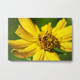Hovering in the Sun Metal Print