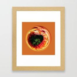 Helicrysum Globe Framed Art Print