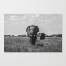The Elephants (Black and White) Canvas Print