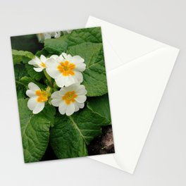 Little primula flower at the park Stationery Cards
