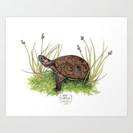Bog Turtle Art Print