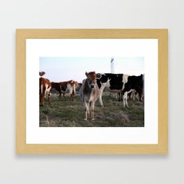 Cows that are friendlier than most humans Framed Art Print