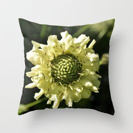 PALE CREAM BEAUTY SCABIOUS FLOWER Throw Pillow