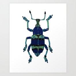 Blue Weevil Art Print