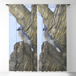 Bluejay Blackout Curtain