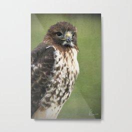 Red-tailed Hawk III Metal Print