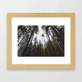 Pacific Northwest Forest Framed Art Print
