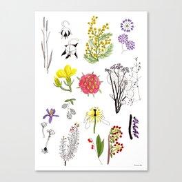 Herbarium #1 Canvas Print