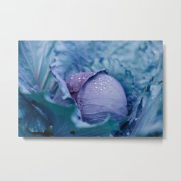 Garden Cabbage Metal Print