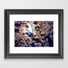 Sky Tree Framed Art Print