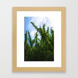 crisp Framed Art Print