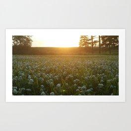 Sunset and Clovers Art Print