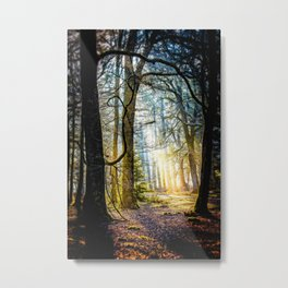 Early morning in the New Forest. Metal Print