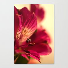 {lily the pink} Canvas Print