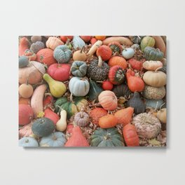 cornucopia (heirloom pumpkins and squashes) Metal Print
