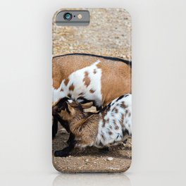 Goat feeds her goatlings, outdoor shooting in good weather iPhone Case