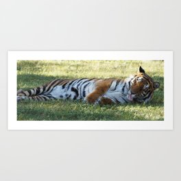 Lazy Tiger Art Print