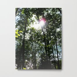 Afternoon Sun • Northpointe Fitness Park & Nature Trails • Marysville, WA Metal Print