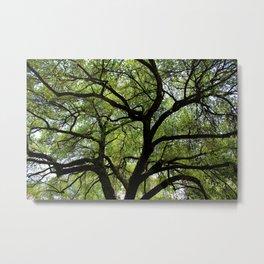 Oak Of Life Metal Print