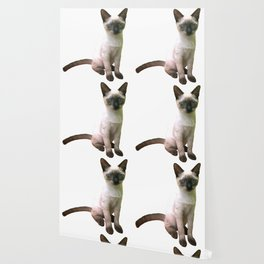 Siamese Kitten Wallpaper