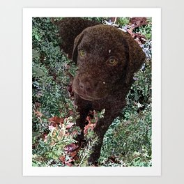 Puppy in the Hemlocks Art Print