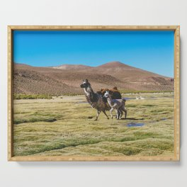 Mother and Baby Llama in Bolivia Serving Tray