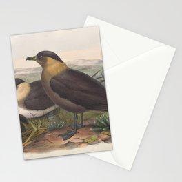 080 Parasitic Jaeger stercorarius parasiticus4 Stationery Cards