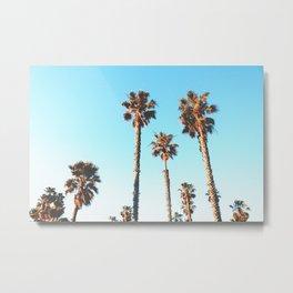 Sunny Palm Metal Print