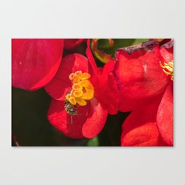 New Perspectives Canvas Print