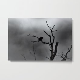 Solitary Crow Metal Print