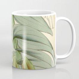Epidendrum medusae or Nanodes medusae Curtis' 94 (Ser. 3 no. 24) pl. 5723 (1868) Coffee Mug