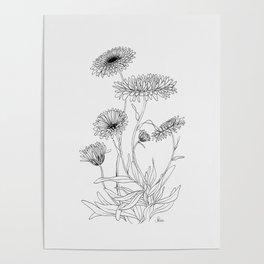 Calendula Flowers Poster