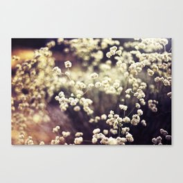 Baby's Breath 2 Canvas Print