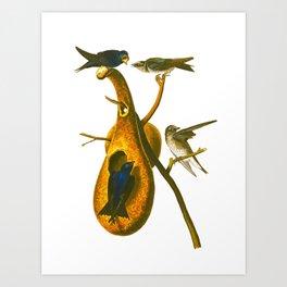 Purple Martin Bird Art Print
