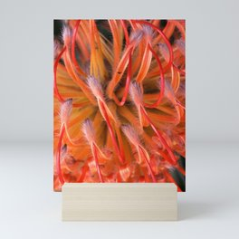 The Visitor on Red Protea Mini Art Print