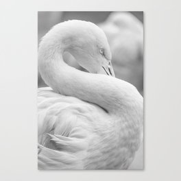 Mad Flamingo (Black and White) Canvas Print