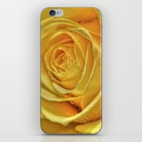 rose gold iPhone & iPod Skins featuring Gold Rose by Tracy66