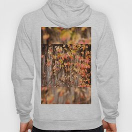 Vitaceae family ivy wall abstract Parthenocissus quinquefolia Hoody