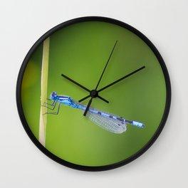 Lovely Blue Damselfly Wall Clock