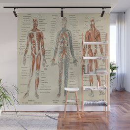 Anatomy Vintage Scientific Illustration French Language Encyclopedia Lithographs Educational Wall Mural