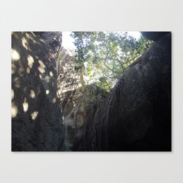 Tree Roots, Rock Formation, Baths, Virgin Gorda, Brittish Virgin Islands. Canvas Print