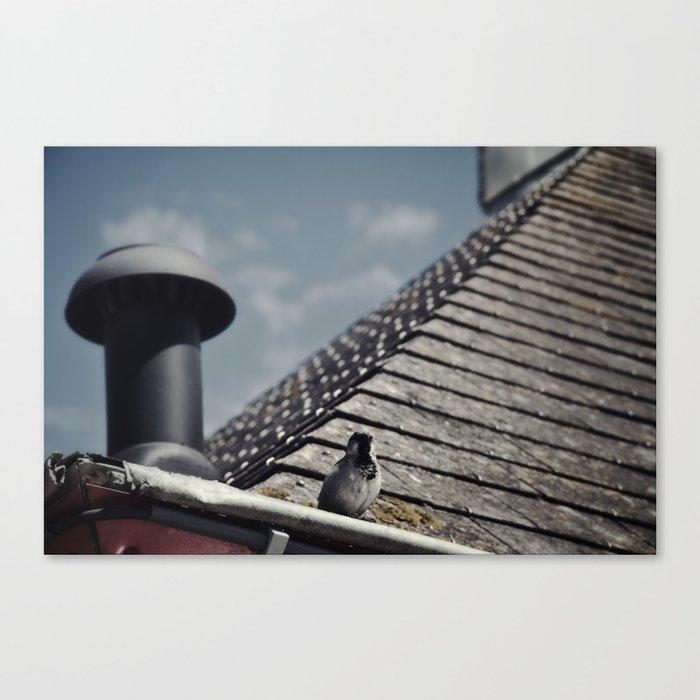 bird on a roof Canvas Print