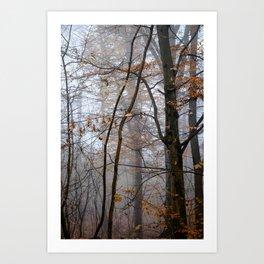 Shinrin-yoku in November Art Print