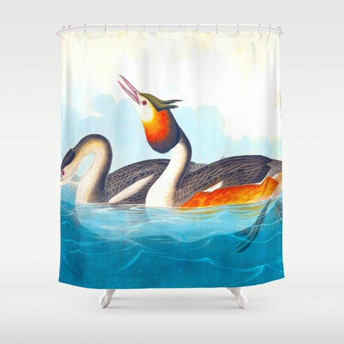 Great Crested Grebe Bird Shower Curtain