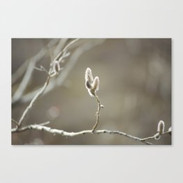 Willow Dreams Canvas Print