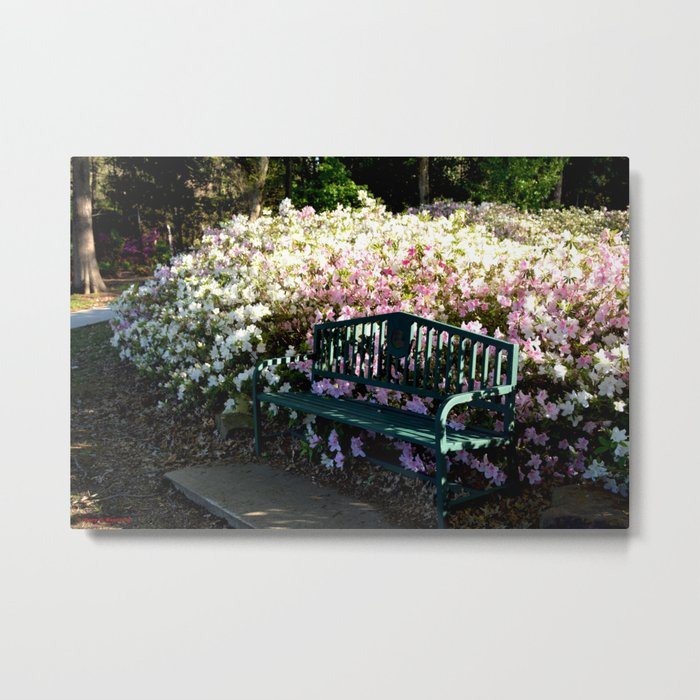 Muscogee (Creek) Nation - Honor Heights Park Azalea Festival, No. 07 of 12 Metal Print