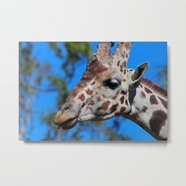 A Little Wednesday Wit Metal Print