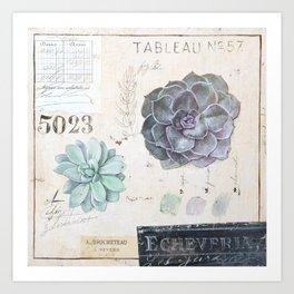 Echeveria Succulent Art Print
