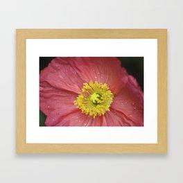 large pink poppy Framed Art Print