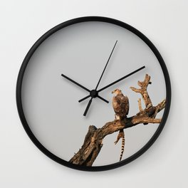 Hawk Eagle with its Catch Wall Clock